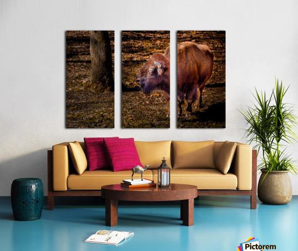 Bison Split Canvas print
