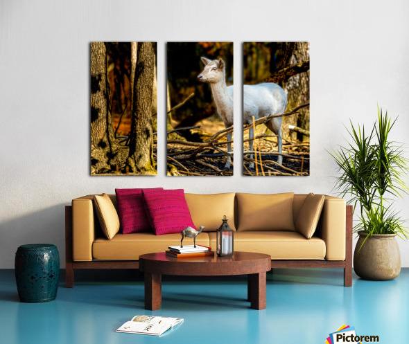 Fallow Deer 3 Split Canvas print