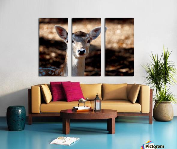 Fallow Deer 1 Split Canvas print
