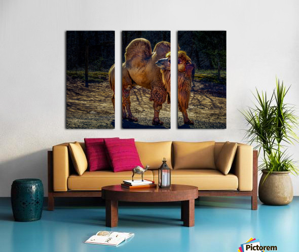 Bactrian Camel Split Canvas print