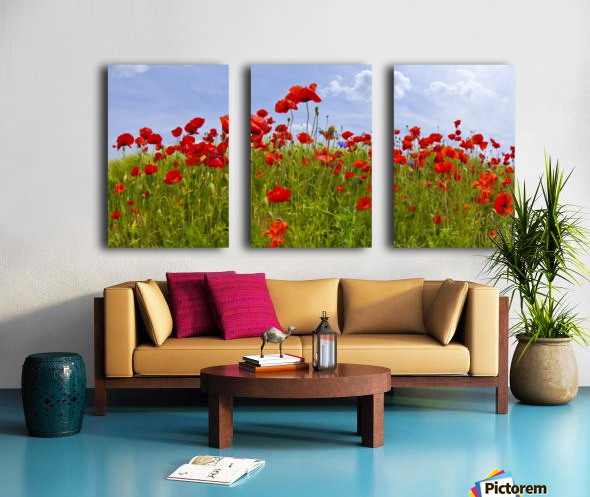 Field of Red Poppies Split Canvas print