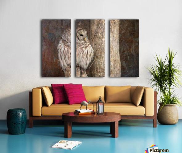 Barred Owl in Grunge Split Canvas print