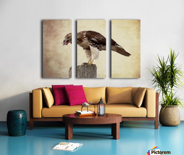 Meal Time for a Hawk Split Canvas print