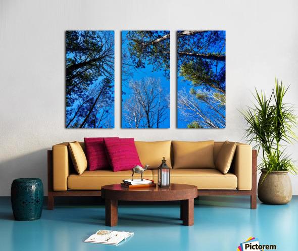 Towering Trees Bright Blue Sky Split Canvas print
