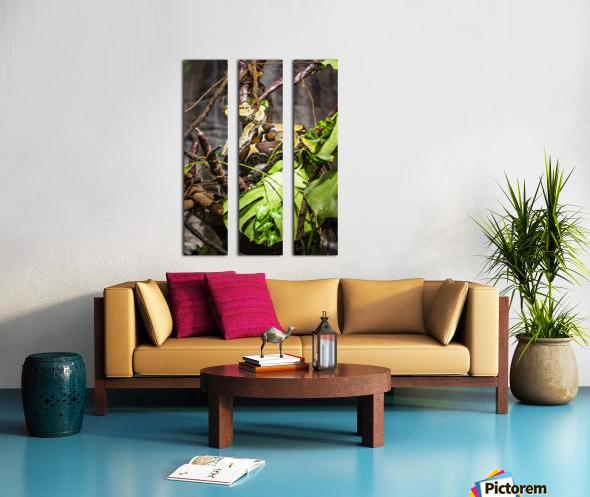 Curled Up  Python  Split Canvas print