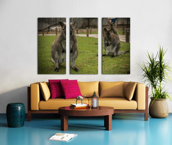 Intriguing   Wallaby  Split Canvas print