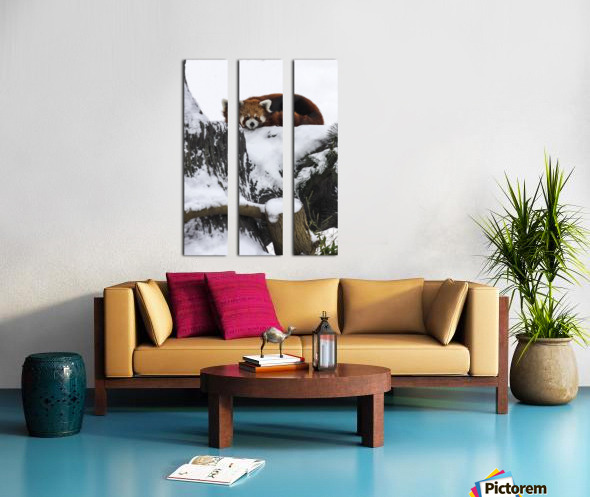 Red Panda Split Canvas print