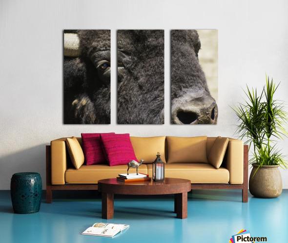 Reflection of a Buffalo Split Canvas print