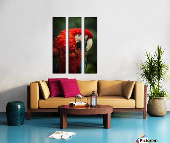 Parrot Portrait Split Canvas print