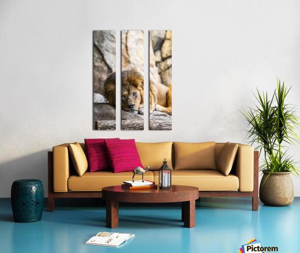 Connection  Lion  Split Canvas print