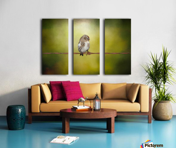 Redpoll on a Wire Split Canvas print