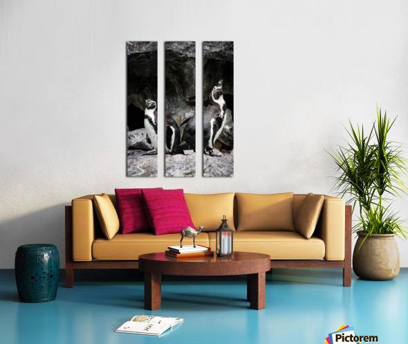 Posing for the Camera  Penguin  Split Canvas print
