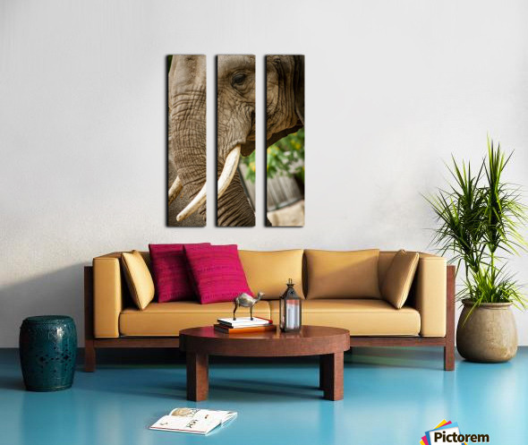 Wrinkles  Elephant  Split Canvas print