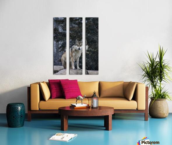 Cold Night Wolf Split Canvas print