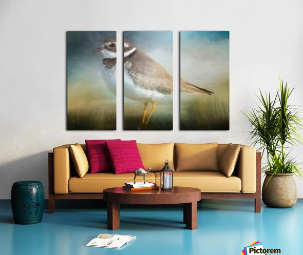 Semipalmated Plover Split Canvas print