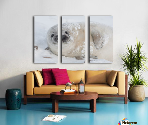 You can call me Snowball! Split Canvas print