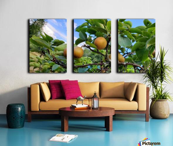 Asian Pears Split Canvas print