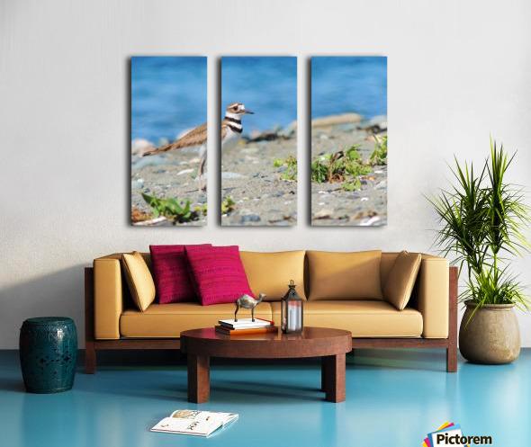 Killdeer on the Beach Split Canvas print