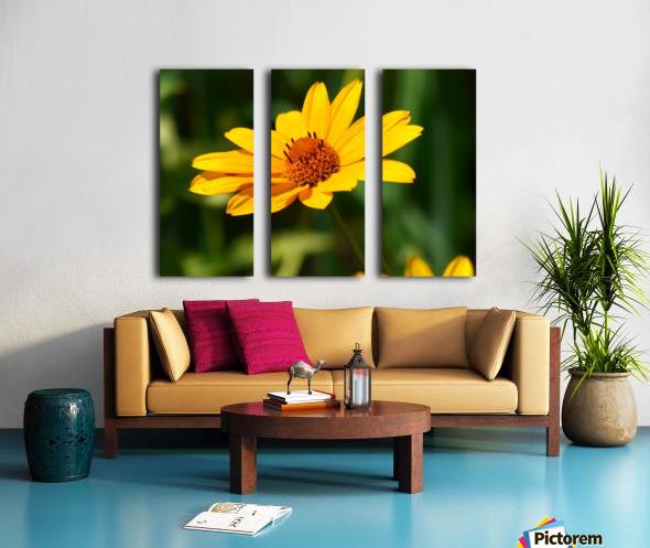 Sunny Side Split Canvas print