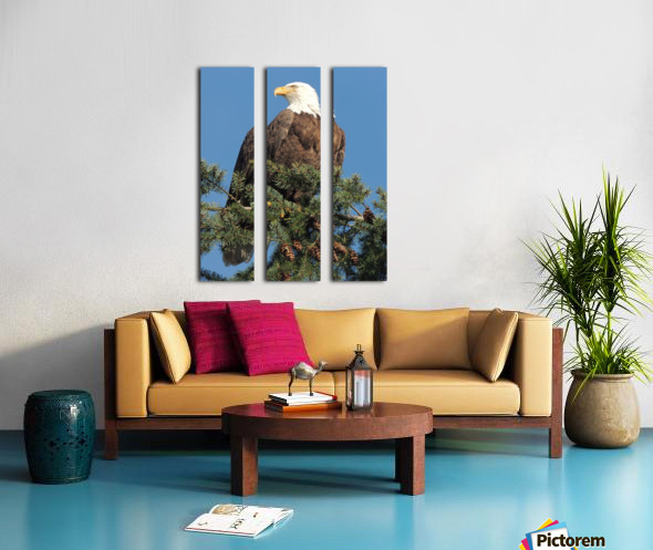 Bald Eagle at Herring Season  Split Canvas print