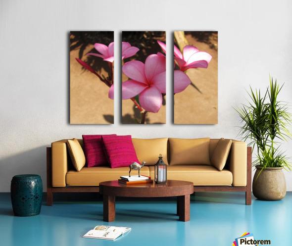 Pink Plumeria Split Canvas print