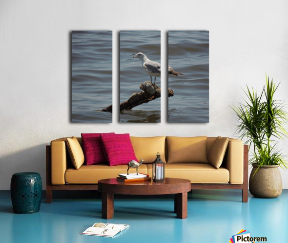 Ring-billed Gull Split Canvas print