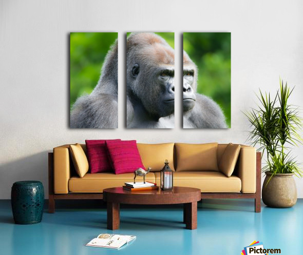 Gorilla Split Canvas print