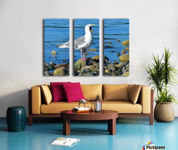 Yawning Gull Split Canvas print