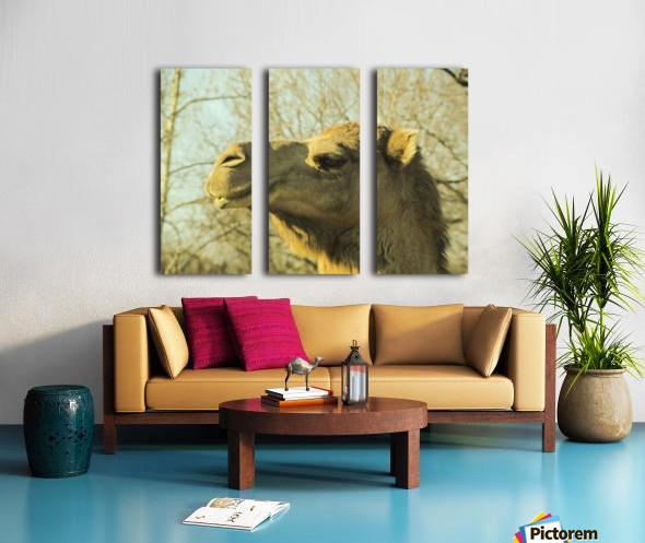 Aribian Camel Split Canvas print