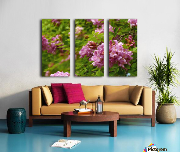 Rose Acacia Blossoms Split Canvas print
