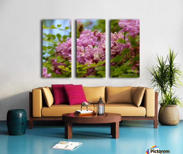 Rose Acacia  Split Canvas print