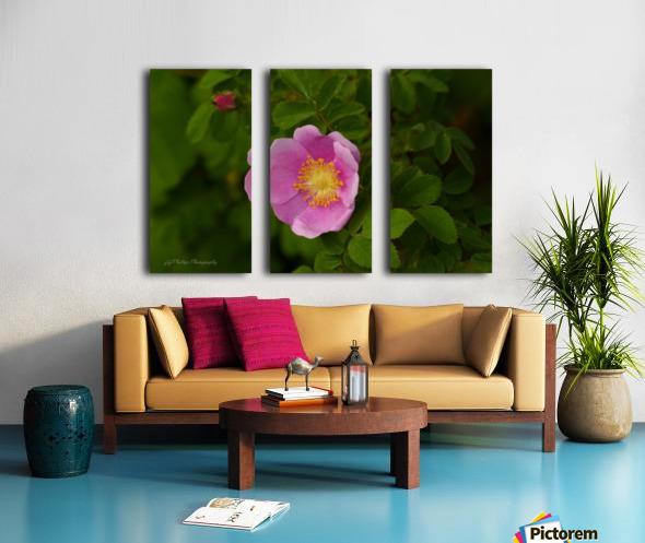 Nootka Rose Split Canvas print