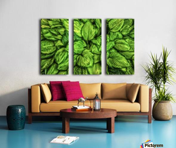 Hosta Glow Split Canvas print
