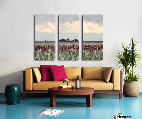 A Perfect Day Split Canvas print