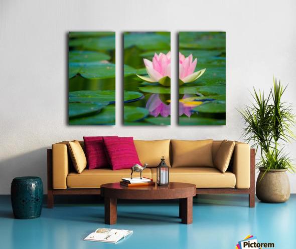 Water lily Split Canvas print