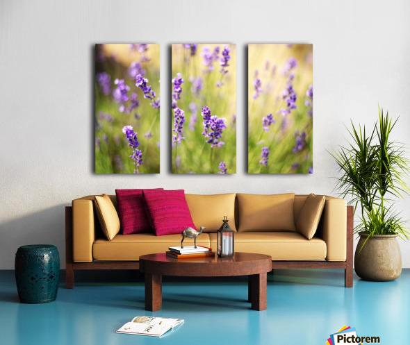 Lavender flowers Split Canvas print