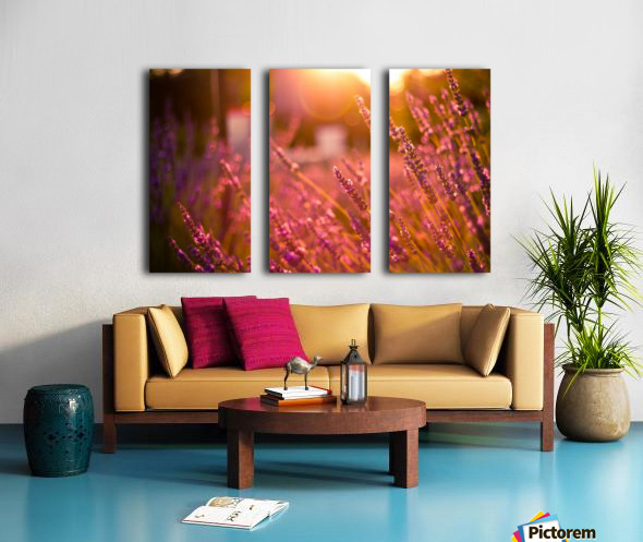 Sunset lavender flowers Split Canvas print