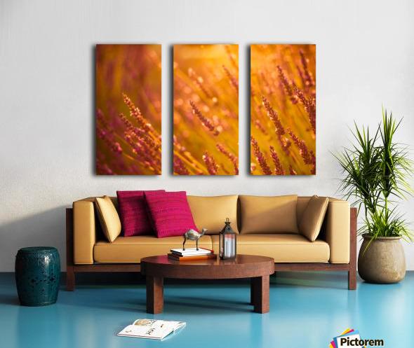 Sunset lavender flowers Split Canvas print