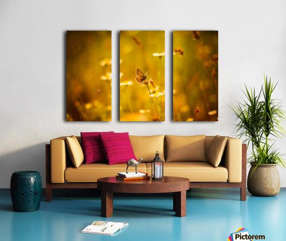 Golden sunset. Daisy and butterfly Split Canvas print