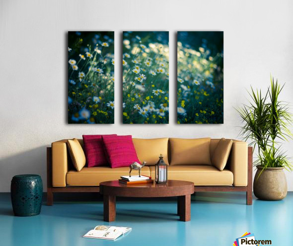 Summer, spring daisy field Split Canvas print