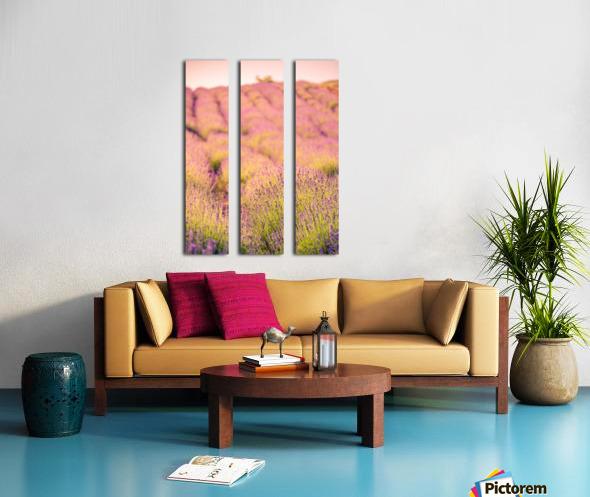 Beautiful Sunset lavender flowers on a field Split Canvas print