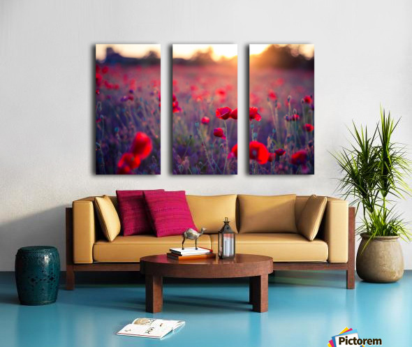 Beautiful Sunset poppy flowers Split Canvas print