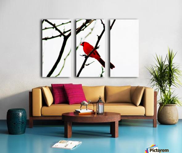 Cardinal Male Split Canvas print