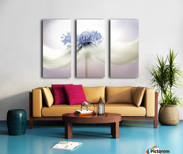 Anemone Split Canvas print