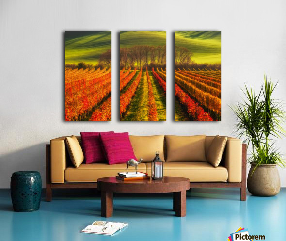 vine-growing Split Canvas print