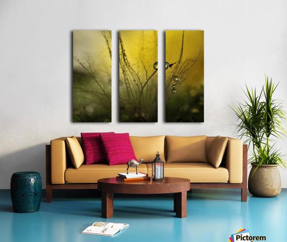 A golden morning shower Split Canvas print