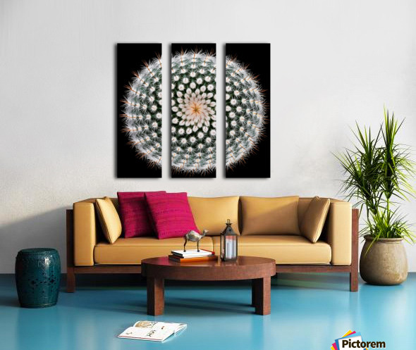 Notocactus scopa Split Canvas print