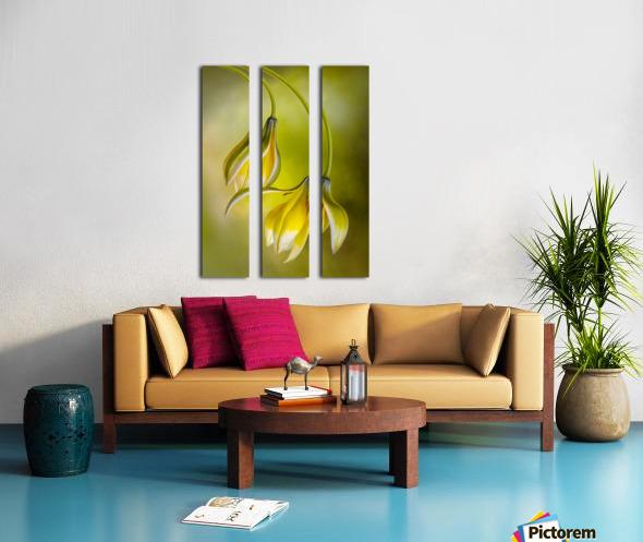 Tulipa Split Canvas print