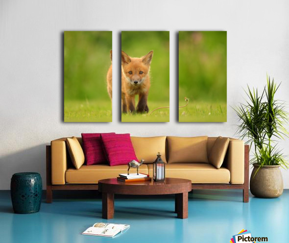 Baby Red Fox Split Canvas print