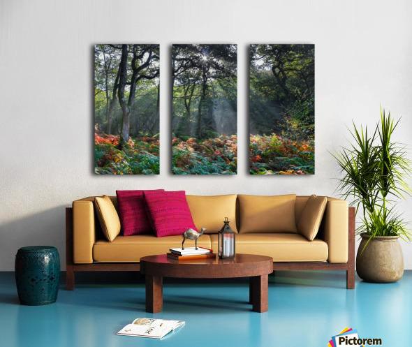 Dewerstone Woods Split Canvas print